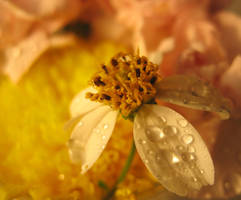 Water Drops on Flower by Larah88