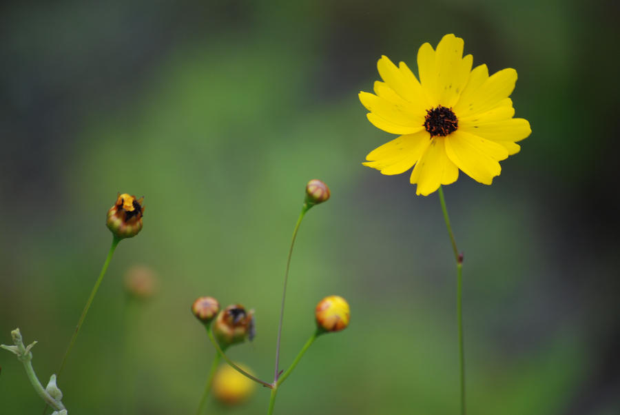 Small yellow flower 2 by larah88 on deviantart small yellow flower 2 by larah88 mightylinksfo