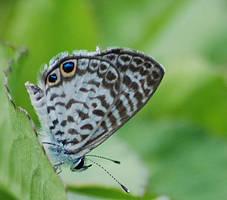 Butterfly Macro by Larah88