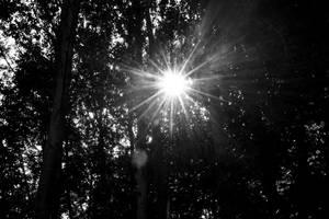 Light Through The Trees - Mono by HKW1994