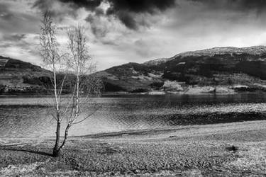 Lone Tree by HKW1994