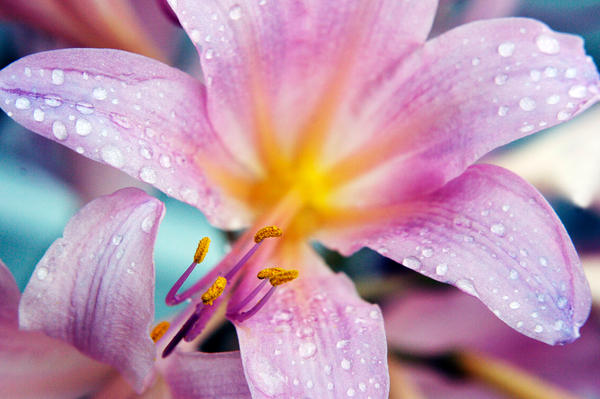 Flower by COwens