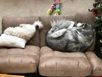 Double Doggy Boredom