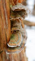 Mushroom Set by pitadragon