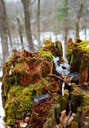 Mossy Stump by pitadragon