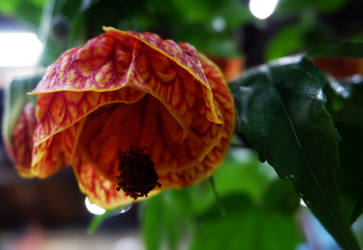 Red Flower by pitadragon