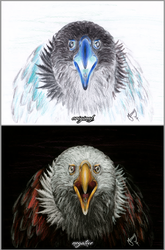 Negative Eagle Drawing by mascarum