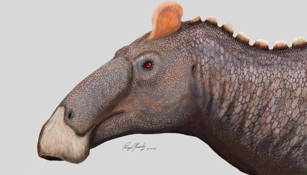 The royal dinosaur from Edmonton, Alberta