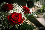 Roses of Love by TheRedLightning