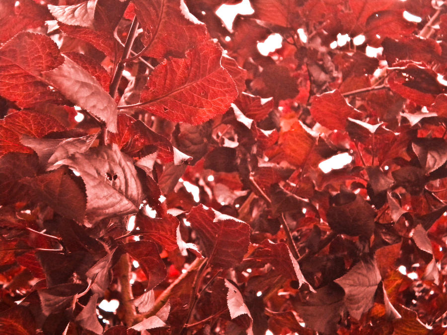 Red Leaves wallpaper > Red Leaves Papel de parede > Red Leaves Fondos