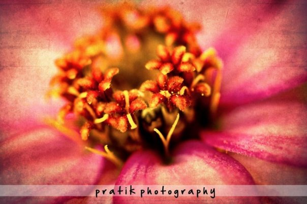 Color Flora by PratikDeviant