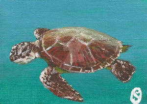 365DCCDay70 Sea Turtle