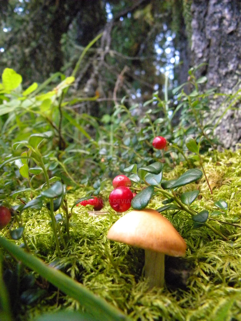 Mushroom and berries by NolanWo