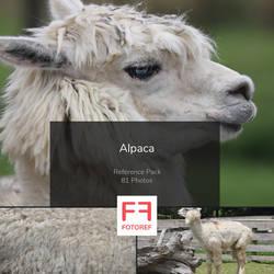 81 photos of Alpaca by Fotoref