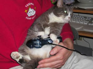 Gamer Kitty