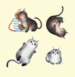 Cats by Talice