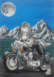 Wild Ride by Eddy-White