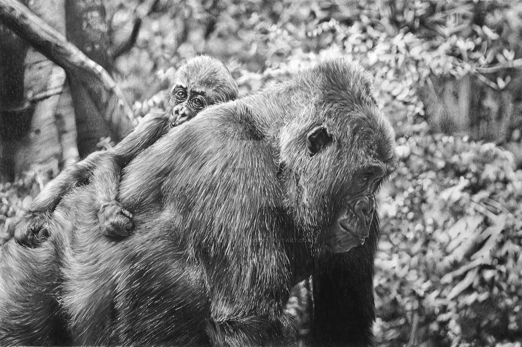 Mother and Infant Gorillas by AlexFleming