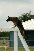 Shepherd Dog Climbing Stock 5 by GloomWriter