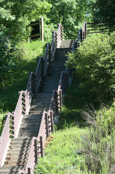 Stairs in the Woods Stock