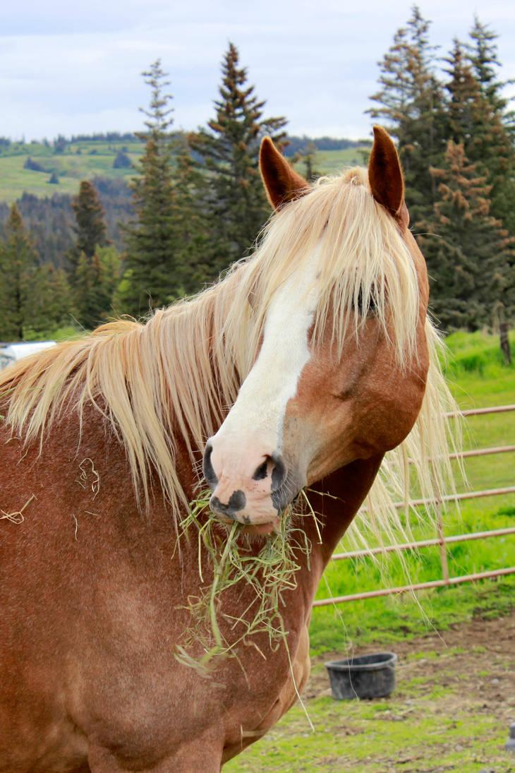 Sorrel Horse Portrait Stock