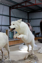 White Wolf Stock 1 by GloomWriter