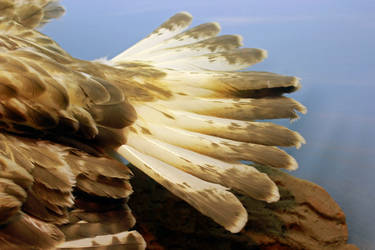 Tail Feather Stock by GloomWriter