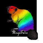 Rainbow Beaver