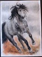 Wild Horse by PsychicPsycho