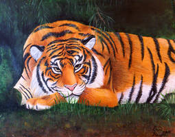Captivating Tiger. by PsychicPsycho