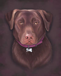 Grace the Chocolate Lab by PsychicPsycho