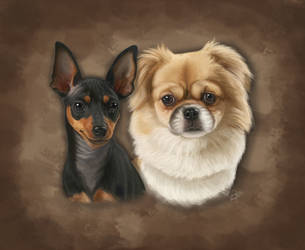 Toy Dogs Pet Portrait by PsychicPsycho