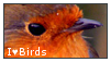 I heart Birds Stamp by IHeartStampplz2