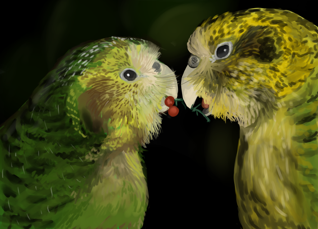 Kakapo Pair by Noctualis on DeviantArt