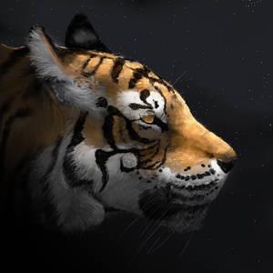 Tiger by Noctualis