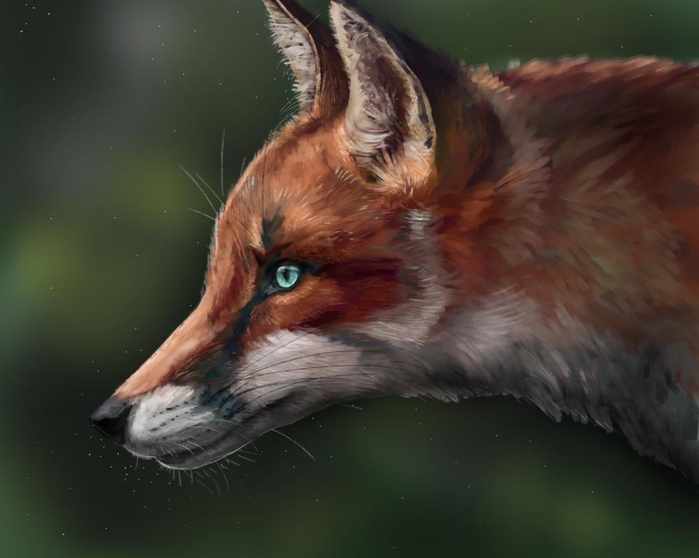 Fox by Noctualis