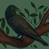 Crow by Noctualis
