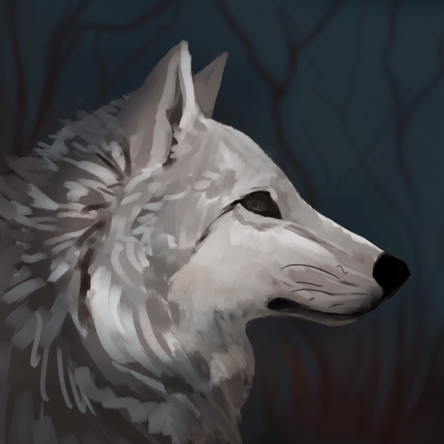 Wolf Sketch by Noctualis