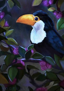 10 New Animals - Baby Toucan