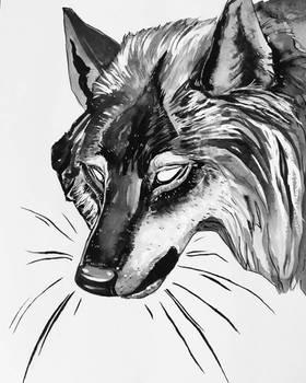 Inktober day 7 - wolf