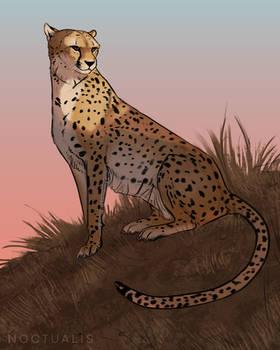 Cheetah Prize