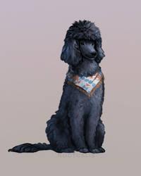 Poodle Commission