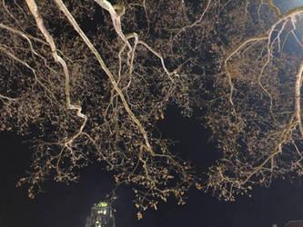 Bryant at Night by MirrorandImage