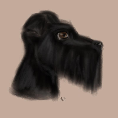 Schnauzer Sketch by Name-of-a-Rose