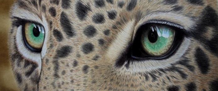 Leopardo by LucaCastiglione