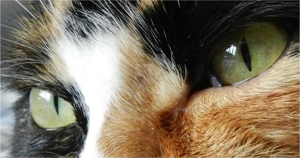 eye's snoky by brisingr29
