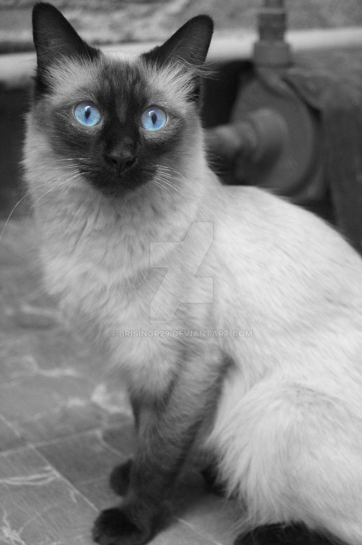 cotufa beatiful eyes by brisingr29