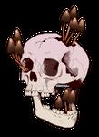 Liberty Skull