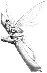 The Fantasy Field Guide - Speckled Woodland Pixie