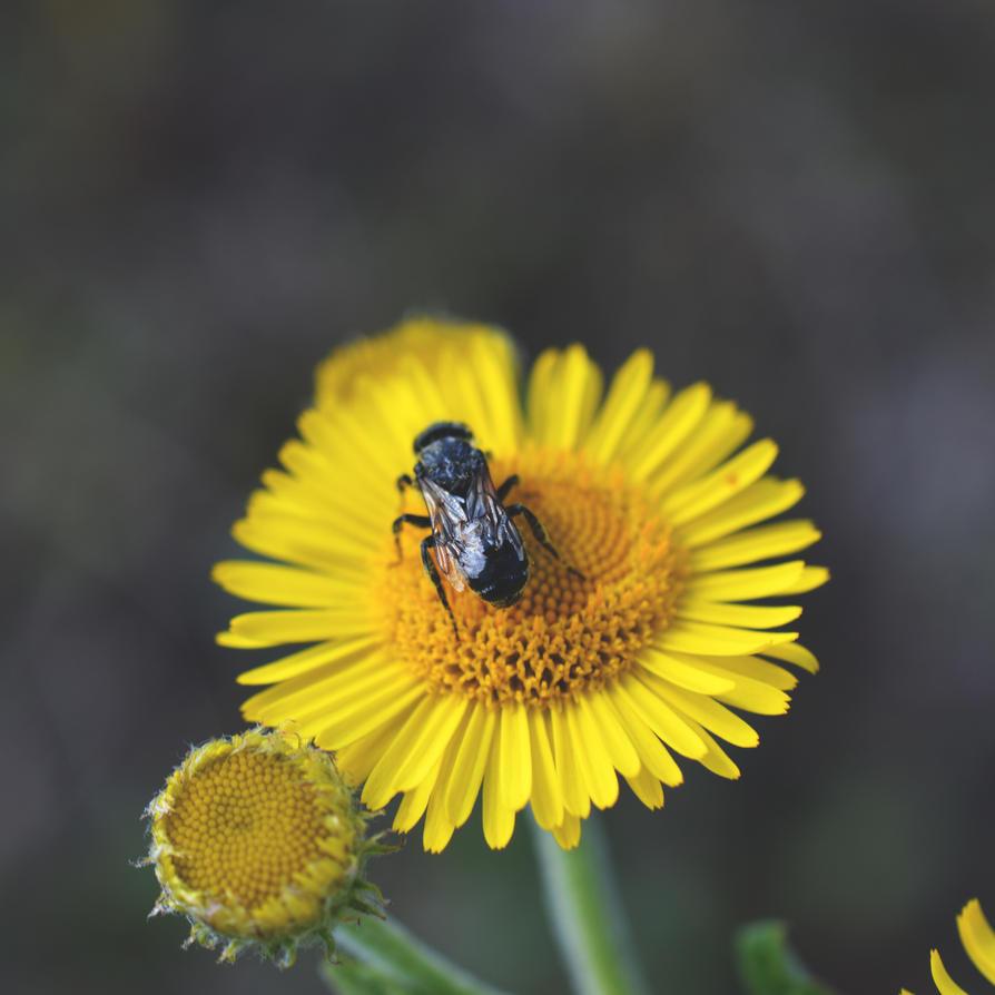 Bee by 1Mathew7